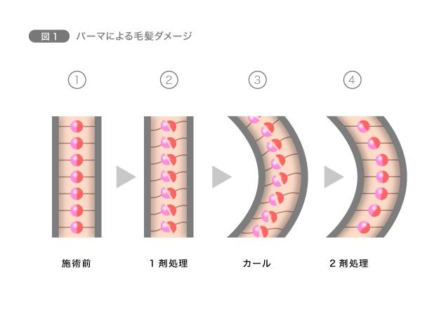 【パーマ&カラー】化学変化で髪の構造に作用 図1