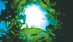 L4_海藻エキス
