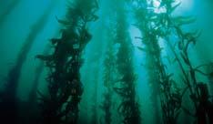「海藻は髪にいい」は真実です