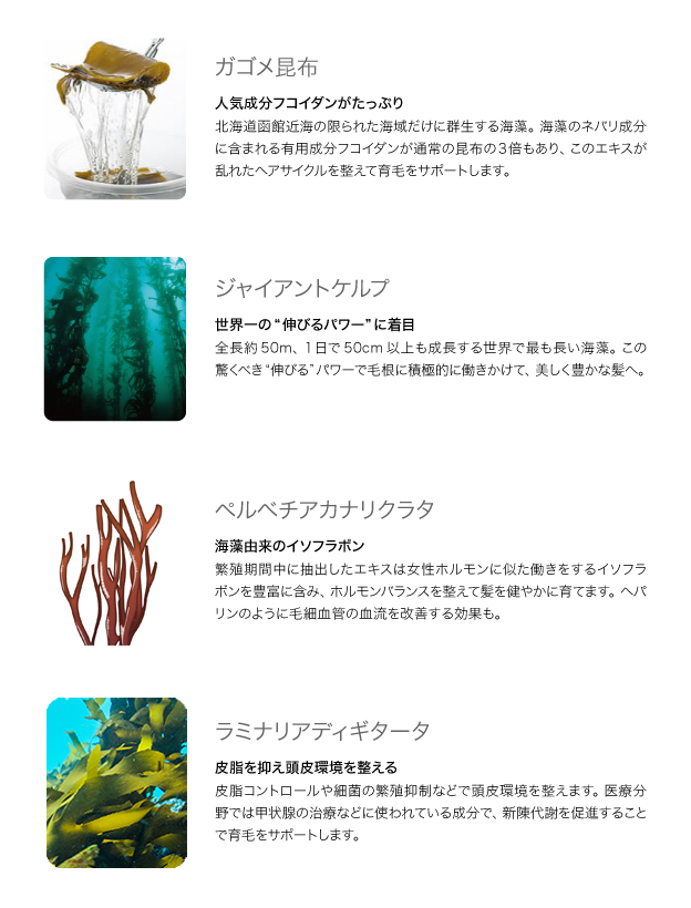 「海藻は髪にいい」は真実です 図